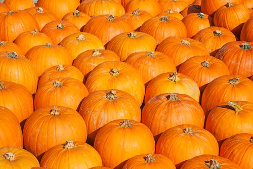 Halloween menù da paura! La Sagra di San Carlo al Camping Florenz (Lido degli Scacchi) • 1 – 3 novembre